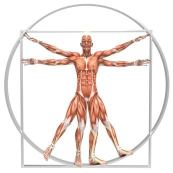 partes del cuerpo que no sirven para nada